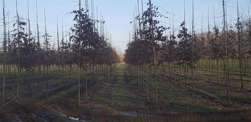 Bomenkwekerij tijdens IVN-wandeling Populieren de Vleut in Best