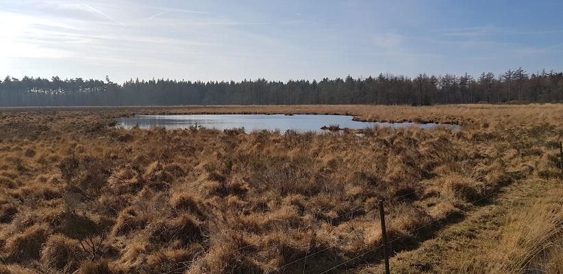 Heide en ven op wandeling over het Roots Natuurpad van Papenvoort naar Hooghalen