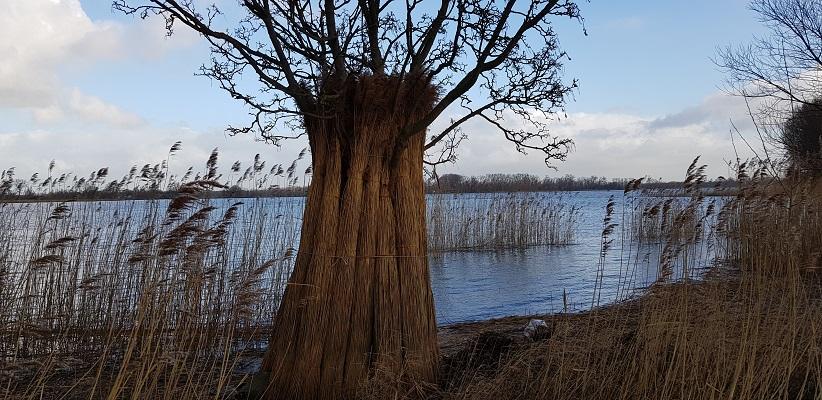 Wandelen over het vernieuwede Waterliniepad door de Noordwaard polder bij Kop van 't Land