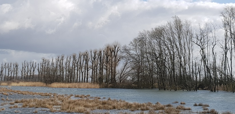 Wandelen over het vernieuwede Waterliniepad door de Noordwaard polder