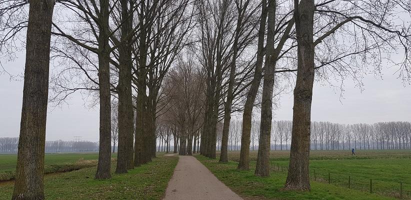 Populieren bij Oosterhout op een wandeling over de Zuiderwaterlinie van Oosterhout via Geertruidenberg naar Hooipolder