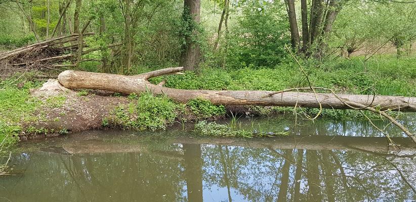 Wandelen over het Peelpad van Altweerderheide naar Stramproy bij beversporen langs de Aabeek