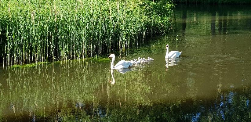 Wandeling over het Dommelpad in Eindhoven bij de Dommel