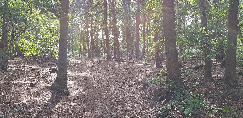 Historische wandeling Heemkunde Bakel over enige holle weg in Noord-Brabant