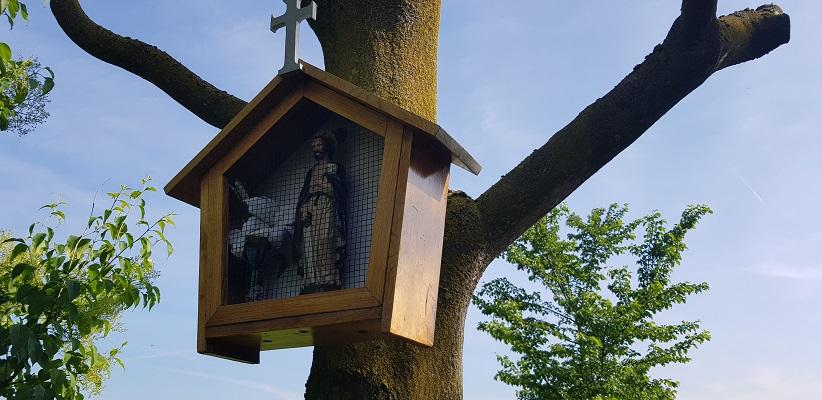 Wandeling Ommetje De Beemden en de Donken in Den Dungen in arboretum