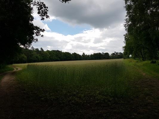 Wandelen buiten de binnenstad van Nijmegen over het Groesbeekpad naar Groesbeek in Groesbeekse bossen