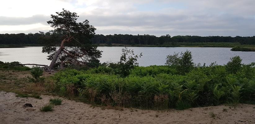 Wandeling over het Airbornepad van Kempervennen naar Genneper Park in EIndhoven bij Malpieven