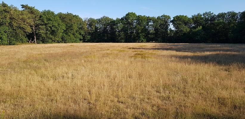 Wandeling van Brabant Vertelt over Doden- en Godenlandschap Paalgraven