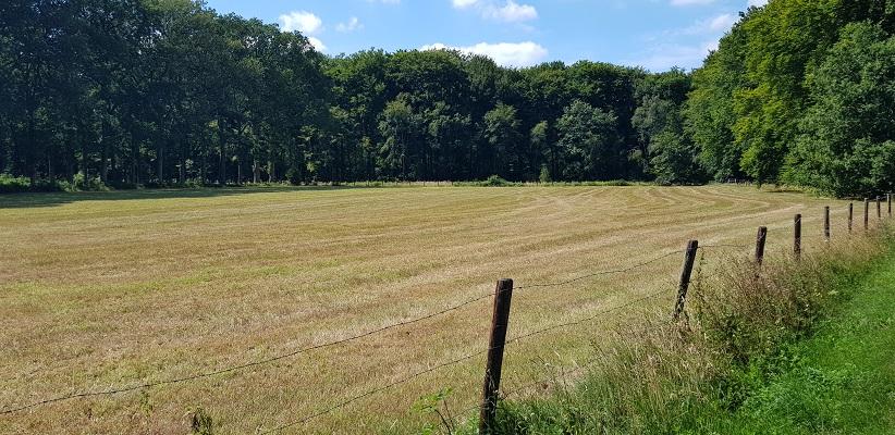 Trage tocht over de Utrechtse Heuvelrug bij Veenendaal bij hooilanden