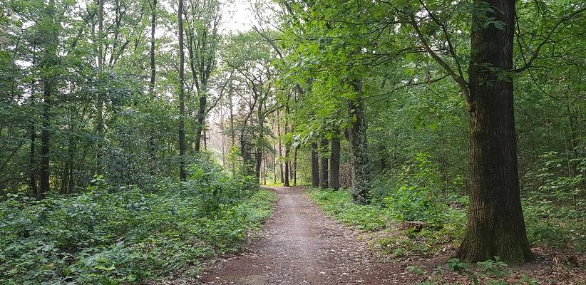 Wandeling buiten de binnenstad van Nijmegen van Gegarandeerd Onregelmatig over het Goffertpad bij Heumensoord