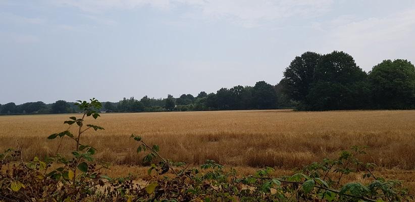 Wandeling buiten de binnenstad van Nijmegen van Gegarandeerd Onregelmatig over het Goffertpad bij landgoed Elsloo