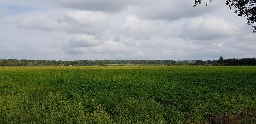 IVN-wandeling bij Landhorst over Waterweetjes