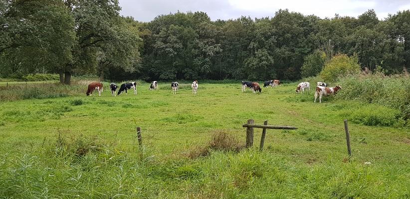 Wandeling over het Roots Natuurpad van Oisterwijk