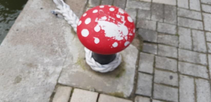 Havenhoofd als paddestoel tijdens wandeling Creative Crosswalks Rotterdam