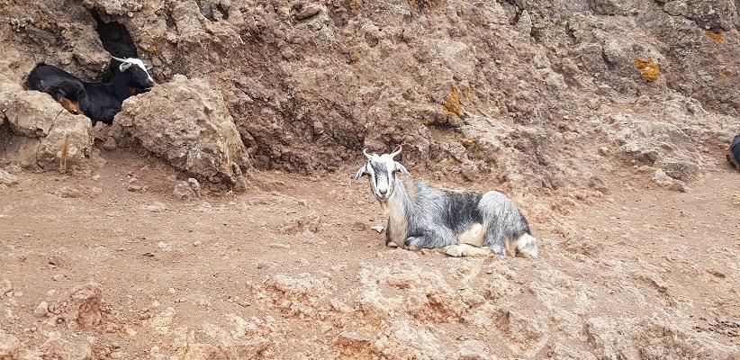Wandeling op La Gomera van Arure naar La Calera over hoogvlakte van l'Amerique