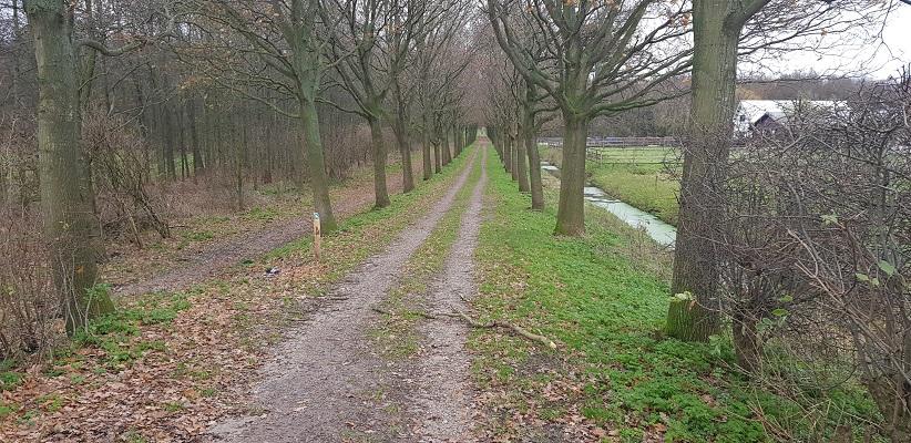 Wandeling over het Romeinse Limespad van Leiden naar Voorburg in het Leidschendammer Hout