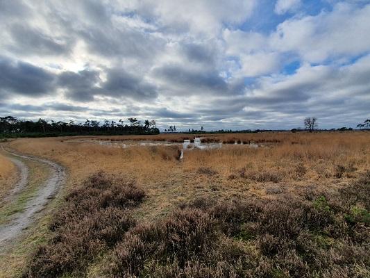 Wandeling bij Lierop over onderduikersroute bij de Stabrechtse Heide