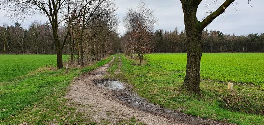 Wandeling over de mooiste zandwegen van Uden bij de Lorkenweg in Odiliapeel