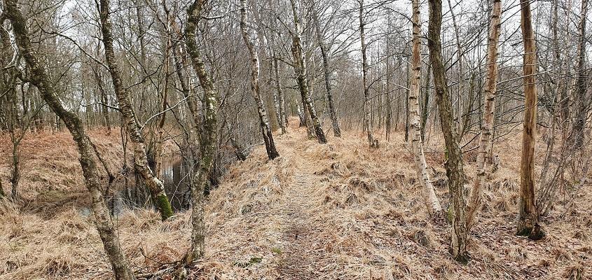 Wandeling over Trage Tocht Helenaveen in de Mariapeel
