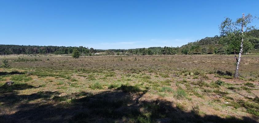 Trage Tocht Brunssummerheide bij het moerasgebied