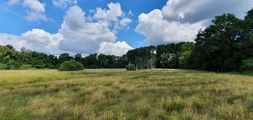 Wandeling over Trage Tocht Wortel-Kolonie bij de Castelreesche Heide