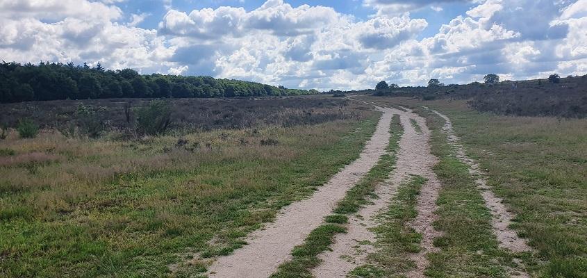 Wandeling over Trage Tocht Hilversum op Hoorneboegse Heide