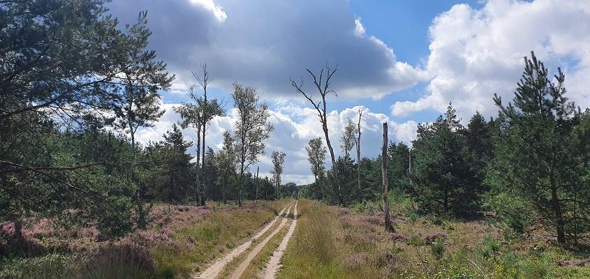 Wandeling over Roots Natuurpad van Landgoed Tongeren naar Apeldoorn in Kroondomein Het Loo