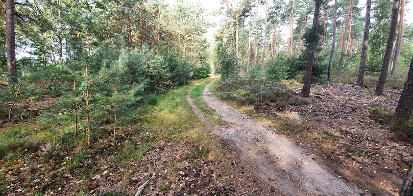 Wandeling over Roots Natuurpad van Landgoed Tongeren naar Apeldoorn