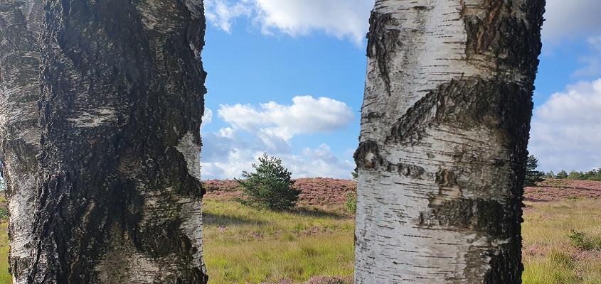 Wandeling over Roots Natuurpad van Landgoed Tongeren naar Apeldoorn bij de Gortelsche Berg