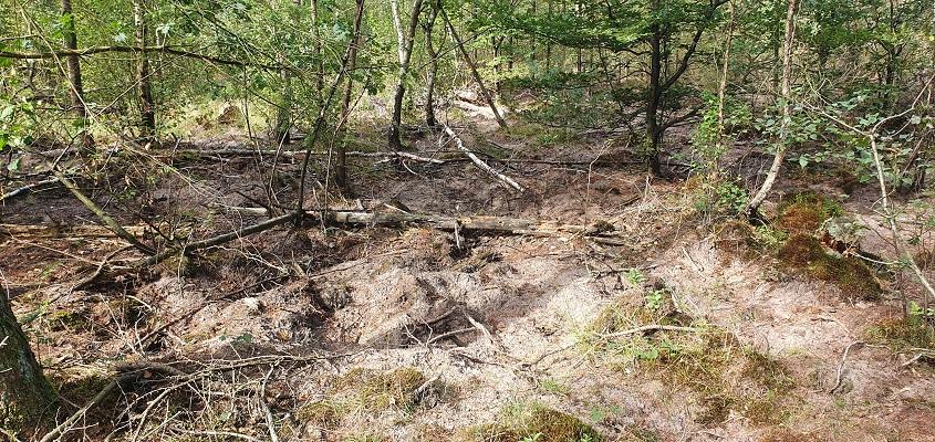 Wandeling over Roots Natuurpad van Landgoed Tongeren naar Apeldoorn bij wroetsporen van everzwijnen