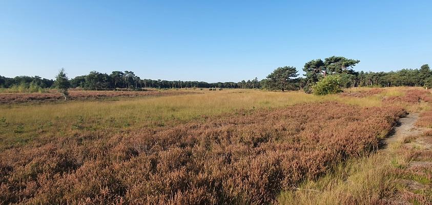 IVN-wandeling over de Nieuwe Heide bij Best