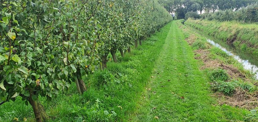 Wandeling over Klompenpad Ambts- en Rijkspad bij appelboomgaard