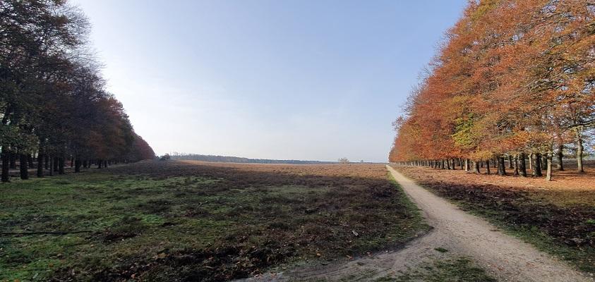 Wandeling over Trage Tocht Planken Wambuis bij de Oud-Reemsterhei