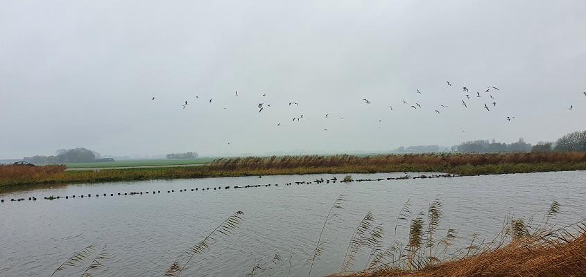 Wandeling over Westfriese Omringdijk van Ursem naar Alkmaar