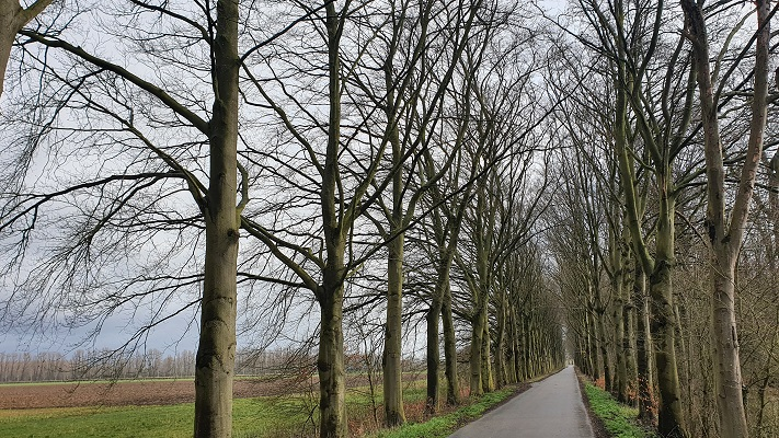 Wandelen over landgoed Mariënweerdt