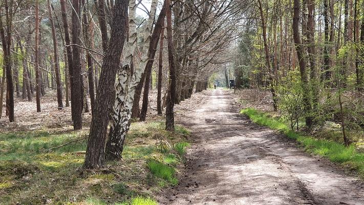 Wandeling over Peelpad in een rondje Milheeze bij de Stippelberg