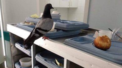 Photo of Στάβλοι τα Νοσοκομεία Μυτιλήνης και Ερυθρού Σταυρού! Ποντίκια και περιστέρια «βολτάρουν» ανενόχλητα