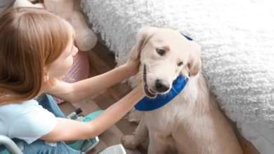 Photo of Πώς οι σκύλοι-βοηθοί αλλάζουν ζωές παιδιών με αναπηρίες