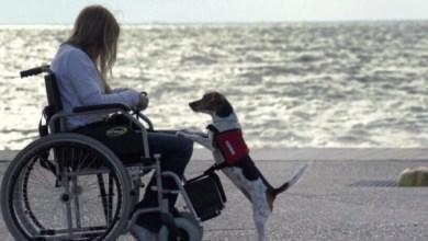 Photo of Σκύλοι βοήθειας: Τι κάνουν – Πώς βελτιώνουν την ποιότητα ζωής των ΑμεΑ – Κατηγορίες
