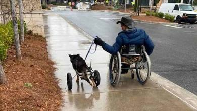 Photo of ΑμεΑ υιοθέτησε σκύλο σε αναπηρικό αμαξίδιο – Ήταν ο μόνος που μπορούσε να τον «καταλάβει»