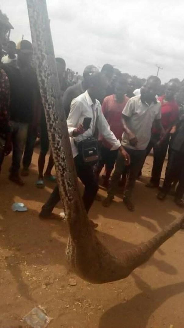Man Kills Python That Swallowed His Dog In Anambra (3)
