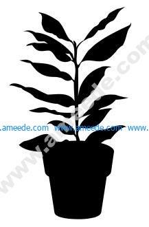 House Plant 6