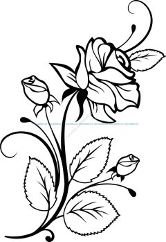 Rose Interior Design Vector