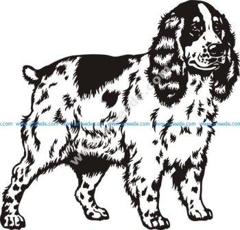 Spaniel dog