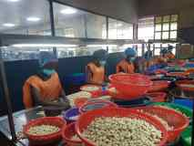 FG expects over 500,000 jobs from cashew production