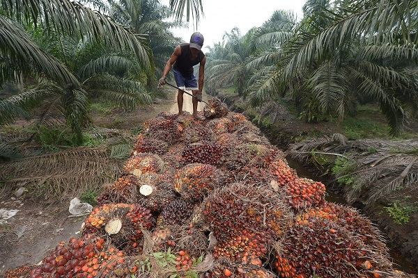CNN's Marketplace Africa explores Nigeria's palm oil industry