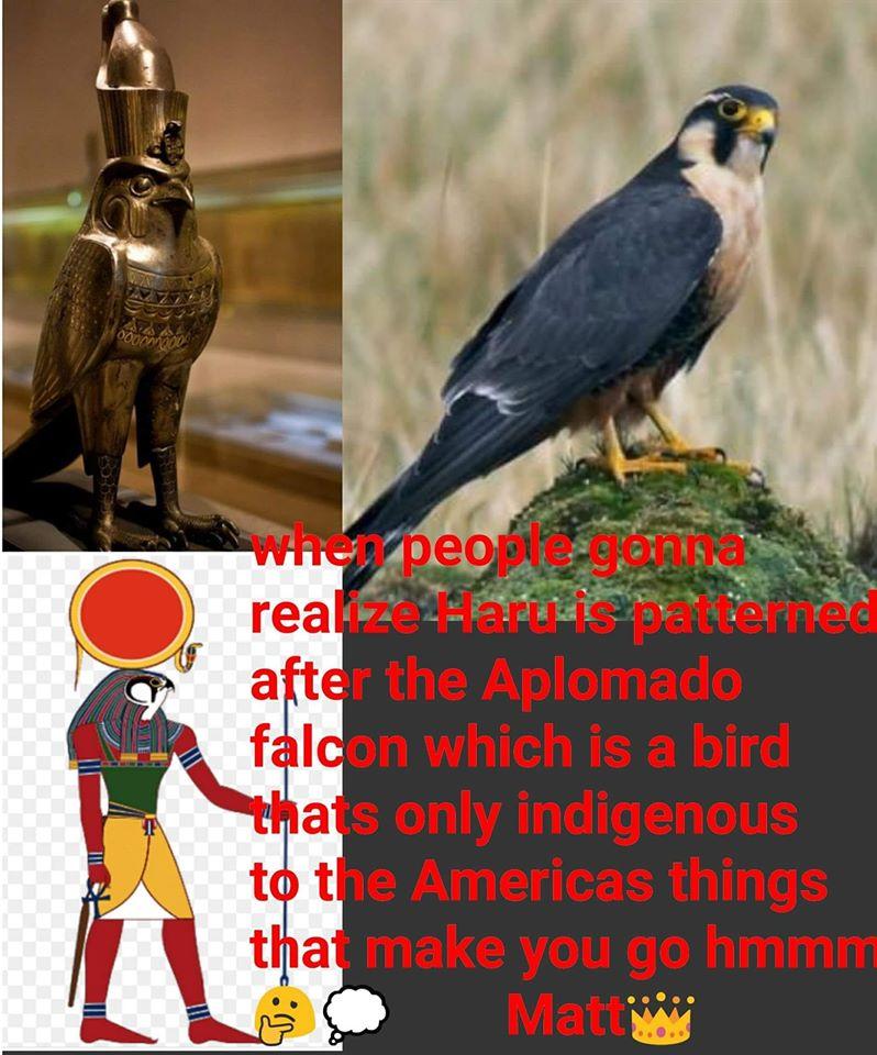 Ancient Egyptian god Horus is the Aplomado Falcon