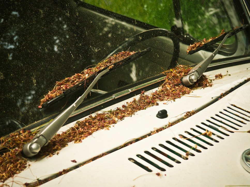 How Pollen affects the paint on your car