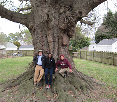 Big tree hunters Gary Williamson (left) and Byron Carmean (right) with National Big Tree Program coordinator at the champion laurel oak. Sheri Shannon. Credit: Sheri Shannon/American Forests.