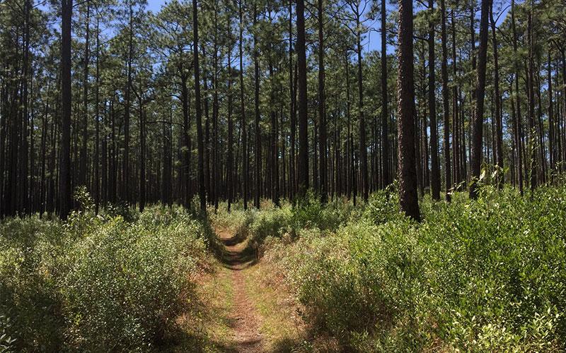 Bear Lake Trail in Florida